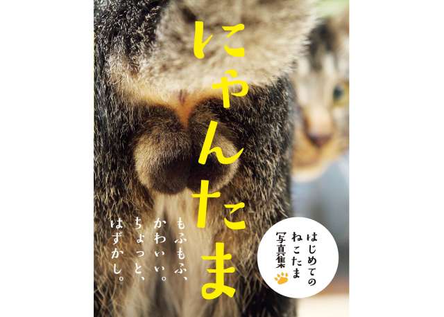 New picture book for the cat fanatic that loves furry balls