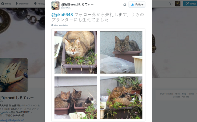 Japanese Twitter users lament that they can only grow potted cats 【Pics】
