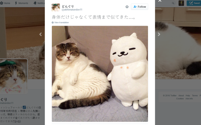 2016 on track to be (subjectively) worst year yet, so here's a bunch of amazing cats!【Photos】