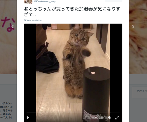 "Cute kitty completely ""mistified"" by vapor released from humidifier【Video】"