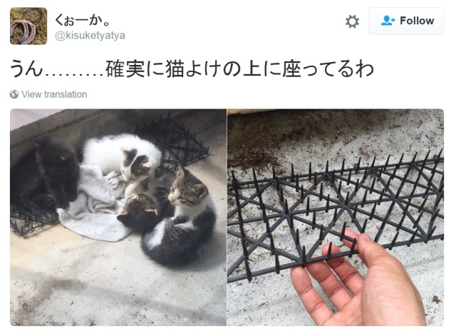 Japanese cats appear to be building resistance to cat-deterrent spikes, Twitter reveals【Photos】
