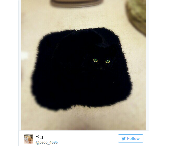 Ninja cats blend into their surroundings in photos on Japanese Twitter 【Pics】
