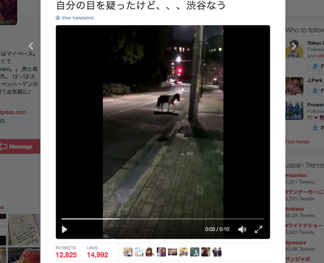 Pony runs through Shibuya after escaping pet shop 【Video】