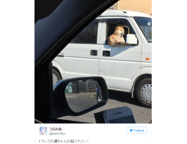 Japan's most handsome delivery driver seems to be this cool canine