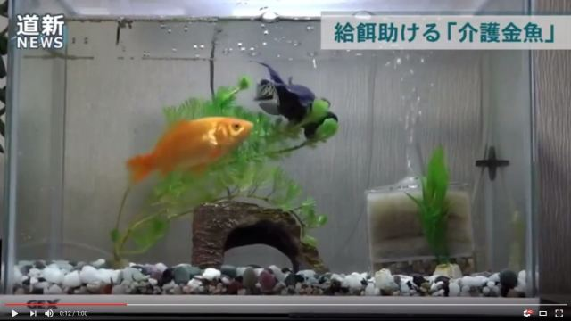 """""""Nurse Goldfish"""" in Hokkaido amazingly appears to help disabled friend eat every time"""