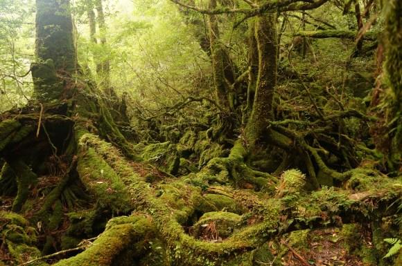 yakushima01-mononoke-forest