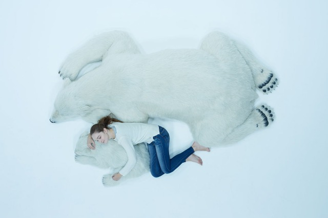 """Animals as Art"" releases incredibly realistic, life-size polar bear figures 【Pics and Video】"