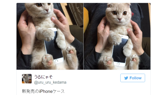 Japanese cat owner's kitty becomes her iPhone case, fills tech fans and animal lovers with envy