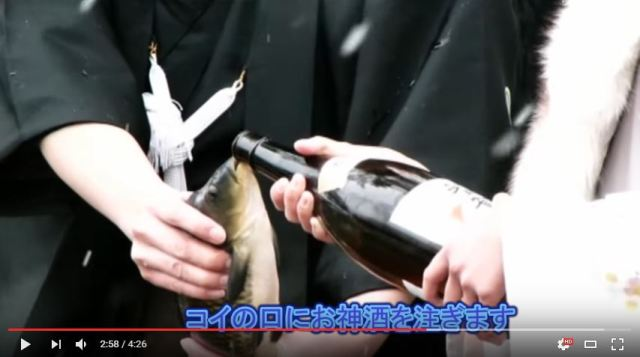 "Shinto ceremony that involves feeding a carp alcohol criticized as ""animal abuse"""