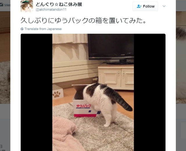 Scottish fold cat shows just how perfectly he fits into this shipping box【Video】