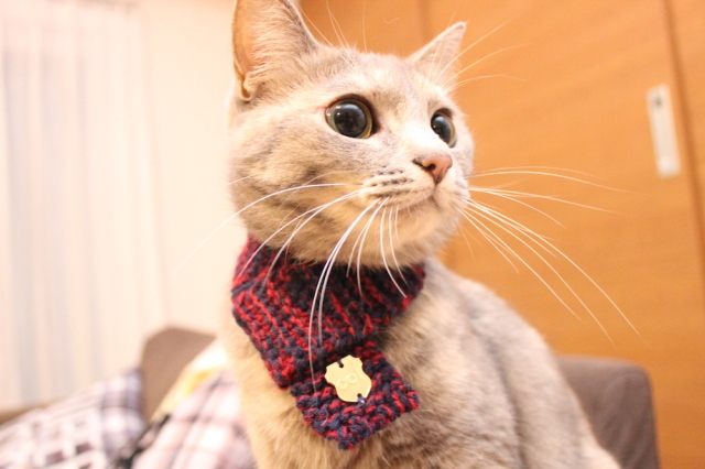 Knitted cat scarves: the latest trend to take the Japanese feline fashion world by storm