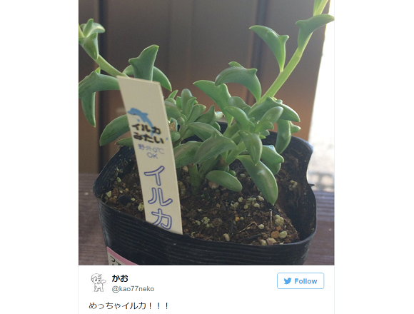 Potted plant that grows tiny leaping dolphins is the latest botanical muse to enchant Japan