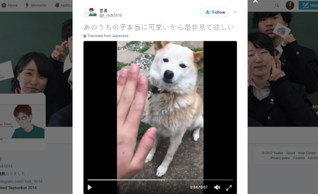 """Owner pulls a """"too slow"""" trick on loving canine【Video】"""