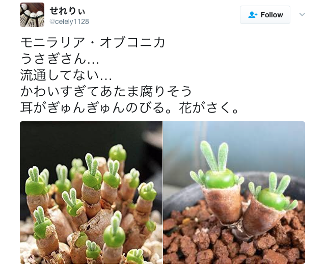 Japan falls in love with plant that grows cute rabbits pulling peace-sign poses