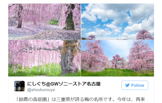Japan's weeping plum trees are so beautiful they'll bring tears to your eyes【Photos】