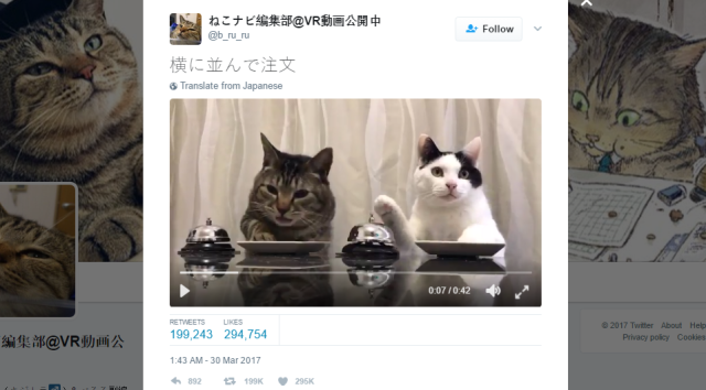 People can't get enough of these adorable cats ordering treats with a bell【Video】