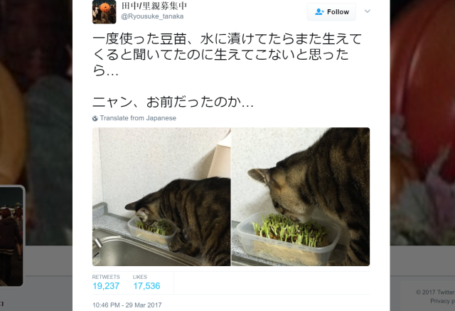 Japanese cat owner wonders why his sprouts won't grow