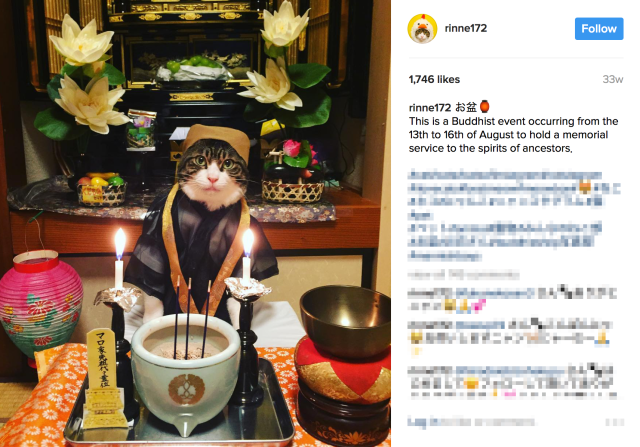 Cute Instagram cat teaches us about Japanese culture with hilarious cosplay photo collection