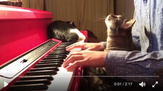 Cat helping his person play Animal Crossing BGM on the piano is super calming, too cute【Video】