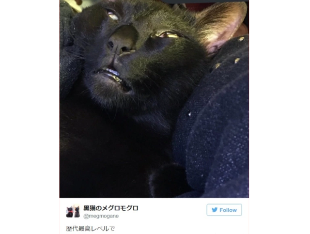 This Japanese cat is all of us at the end of a long week