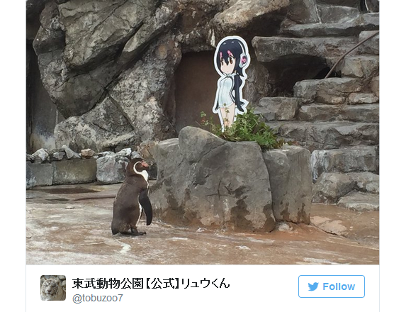 Japanese zoo penguin falls in love with cutout of cute anime penguin girl