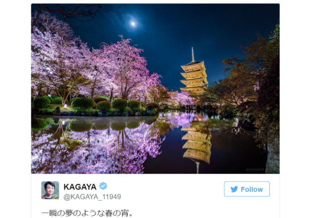 Cherry blossom photography from celestial digital artist is otherworldly beautiful【Photos】