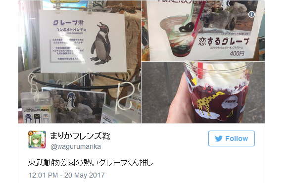 Penguin that fell in love with cardboard cutout anime girl now has his own drink for sale at zoo