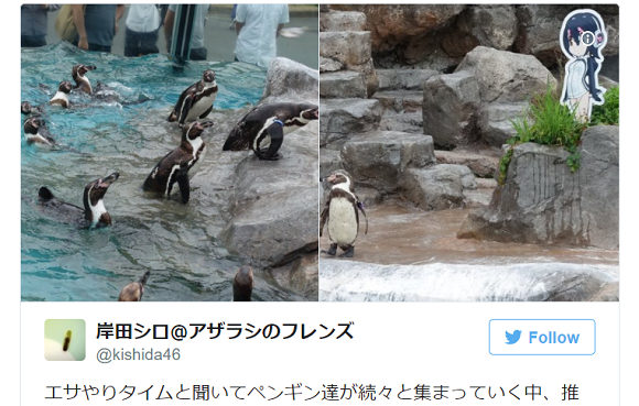 Japanese zoo will let anime-loving penguin keep his 2-D wife for the indefinite future