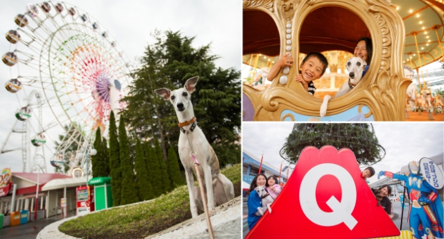 Japanese amusement park opens doors to dogs, lets animals on rides with their owners