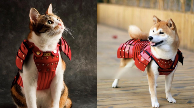 Samurai armor for pets turns your animal companions into adorable dogs and cats of war【Photos】