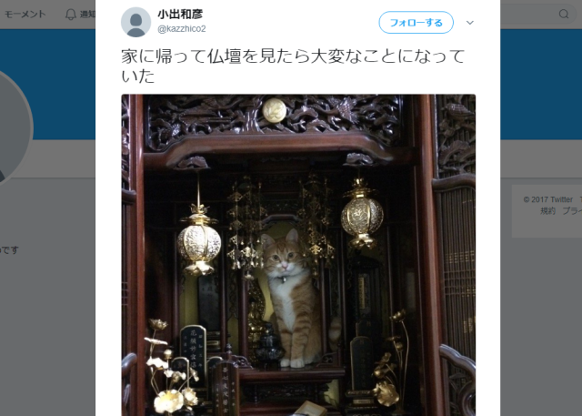 Cat settles itself in Buddhist altar and shocks family