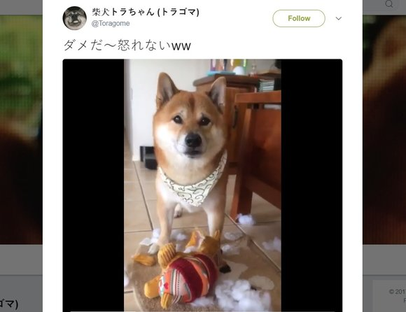 It's official: You can't be angry at Doge【Video】