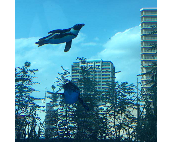 "Real-life Japan continues to look like bad Photoshop as penguins ""fly"" in the Tokyo sky【Photos】"