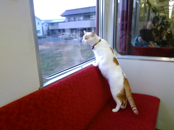 Japan's first cat cafe train announced, receives overwhelming response from feline and rail fans
