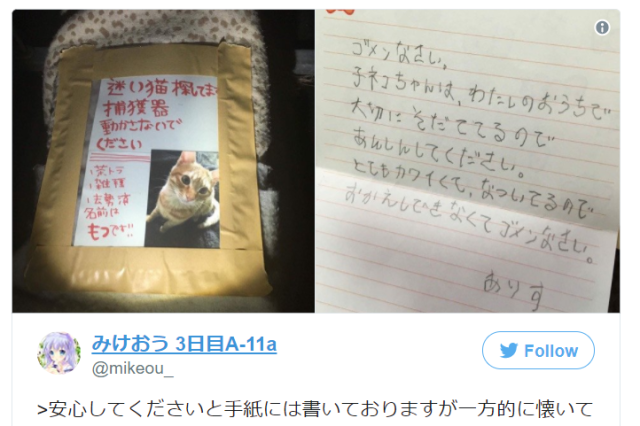 """He's too cute, I can't give him back."" Missing cat case makes fur fly on Twitter"