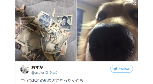 """My dog ate my salary"" – Japanese Twitter user captures the aftermath on camera 【Pics】"