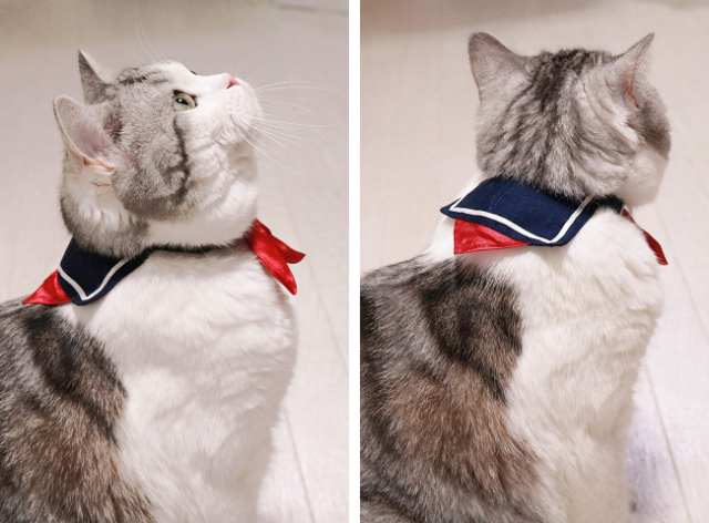 Give some Japanese schoolgirl style to your pet with the adorable schoolcat collar