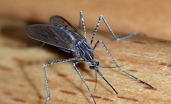 Twitter permanently freezes Japanese man's account after he makes death threat…against mosquito
