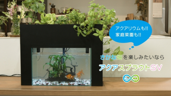 This eco-friendly fish tank and planter uses fish poop to feed your plants