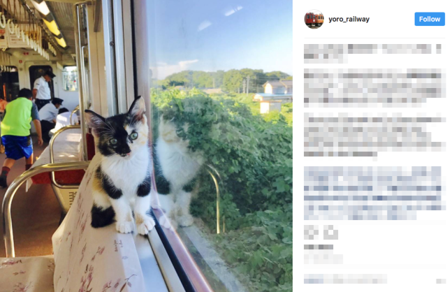 Cat cafe train in Japan makes its inaugural run with rescue cats on board【Photos】