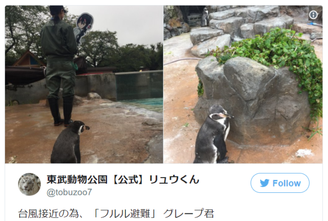 Japan's anime-loving penguin loses his 2-D waifu temporarily, breaks our hearts with sad photos
