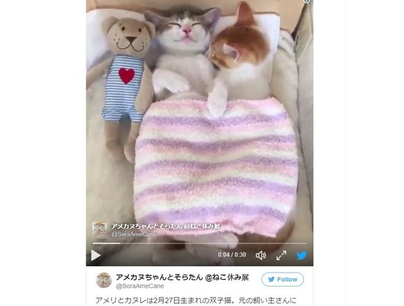 Heart-meltingly adorable kitten twins share bed, and Internet's love【Videos】