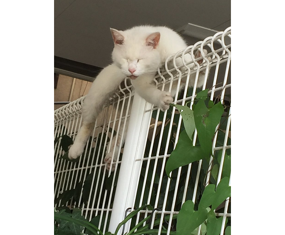 Japanese kitty picks a crazy spot for its daily catnap, becomes local celebrity【Video, photos】