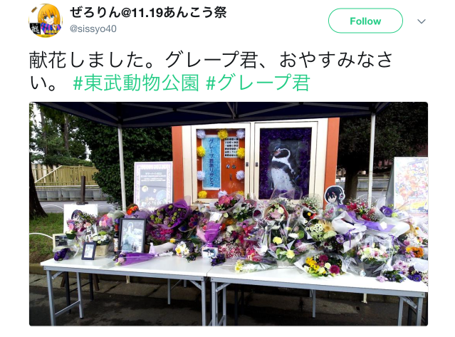Heartbroken visitors leave tributes to Japan's anime-loving penguin Grape-kun at new memorial