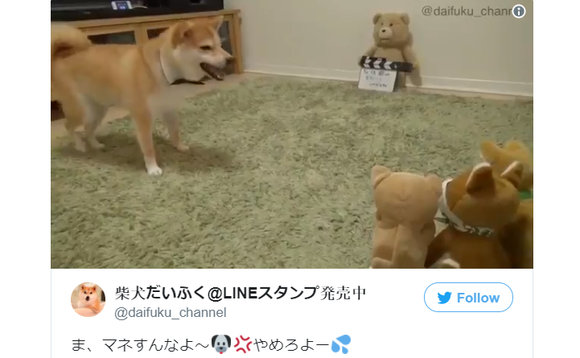 You're so cute when you're angry. Shiba Inu gets angry at mocking mini-me toy【Video】
