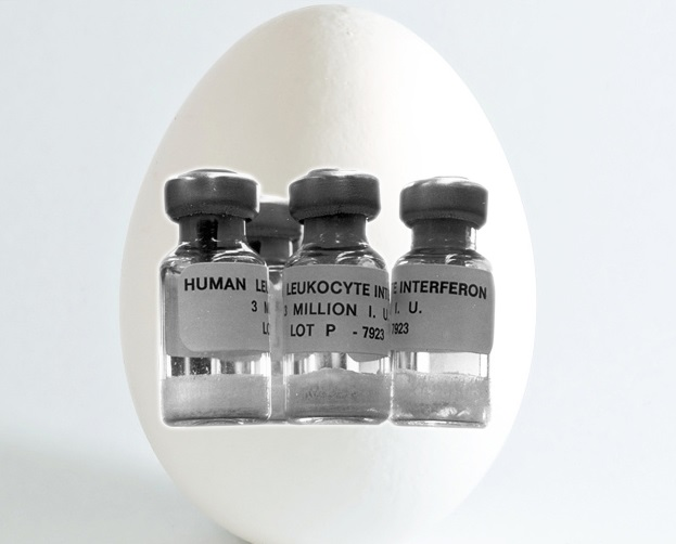 Japanese researchers create chickens that lay eggs containing valuable medicine