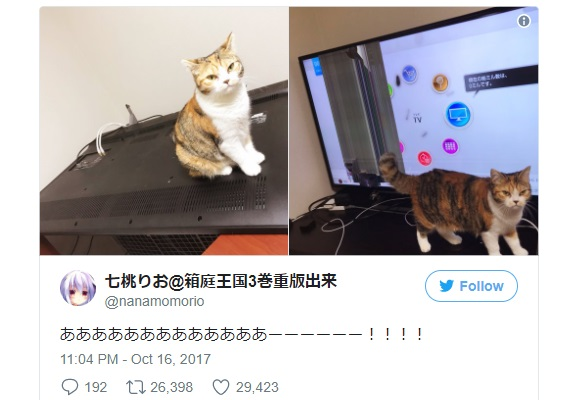 Japanese Twitter users prove that cats and expensive TVs don't make good friends