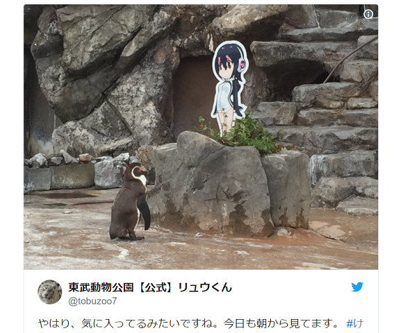 Crowdfunding for memorial statue for Japan's otaku penguin shut down as zoo denies involvement