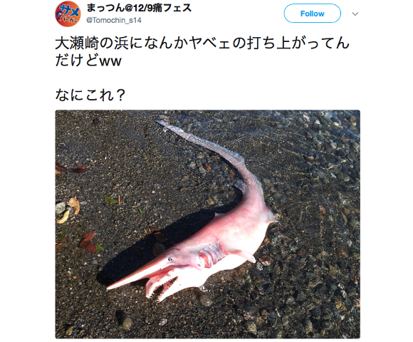 Freaky-looking Goblin shark washes up on beach, almost puts us off seafood for life 【Photos】