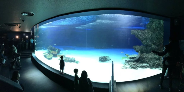 Over 1,000 fish and other marine creatures die at Tokyo aquarium after failed medical treatment